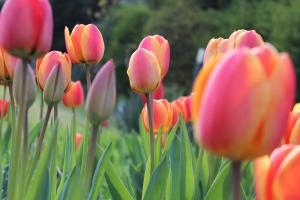 Tavaszi nagytakarítás a lakásban – készítse fel otthonát a legszebb évszakra!