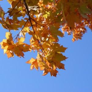 Őszi kirándulóhelyek Magyarországon
