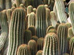 A kaktuszok gondozása
