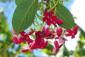 A kertes ház előnyei, miért jó a kert?